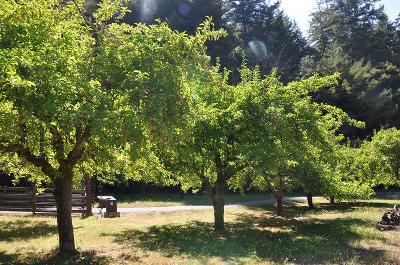 Apple orchard Apple cider